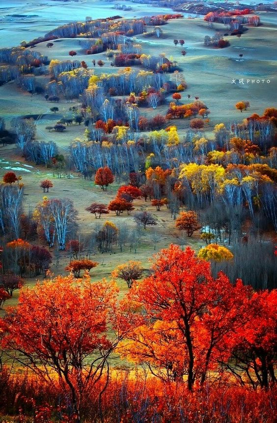 chinese-forest-fall-landscape