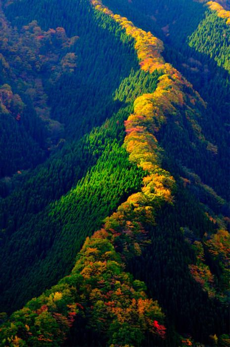 japanese-mountain-range-fall