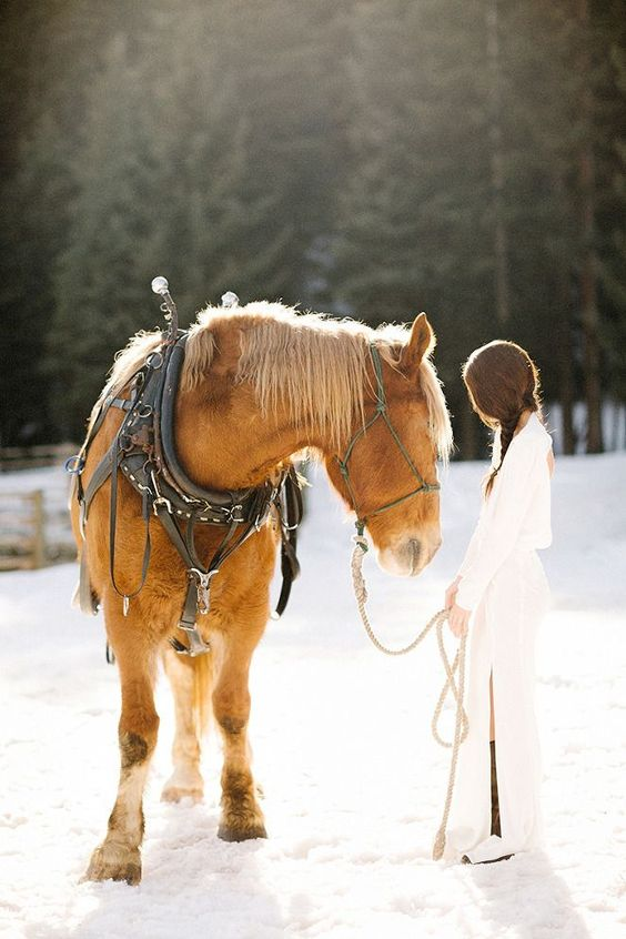 winter-wedding-horse