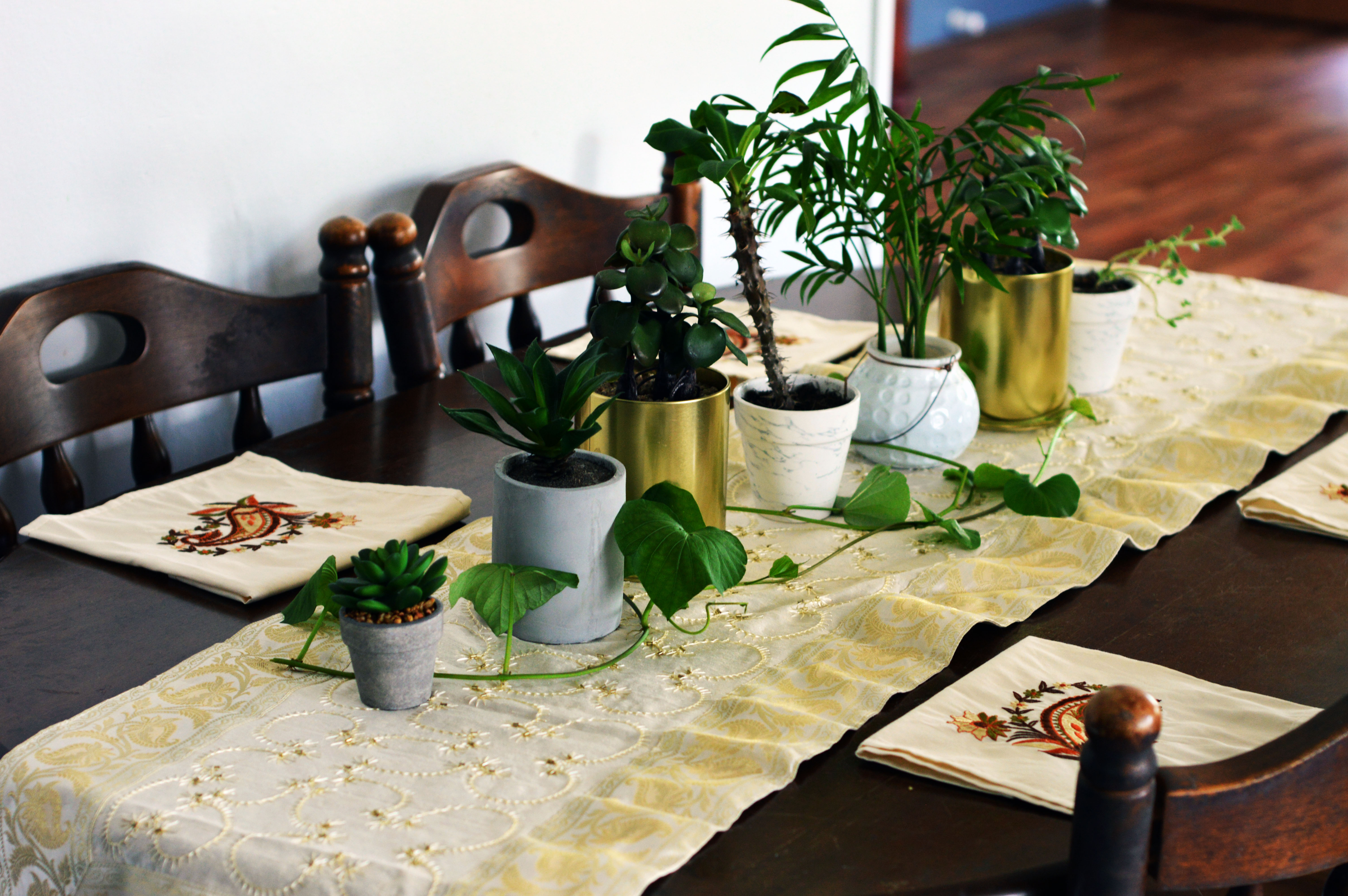 live-plants-succulents-on-kitchen-table-layout