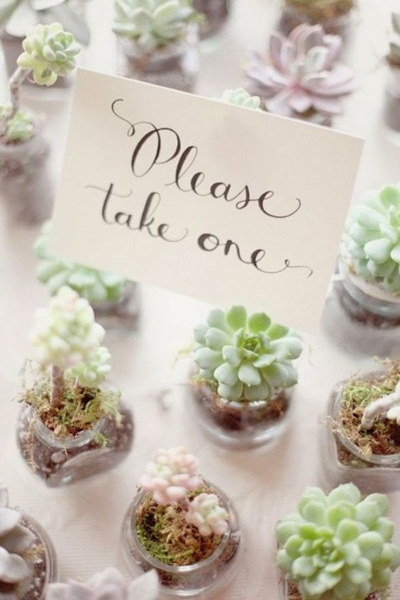 spring-wedding-favor-succulents