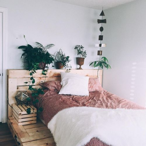 dorm-room-with-greenery