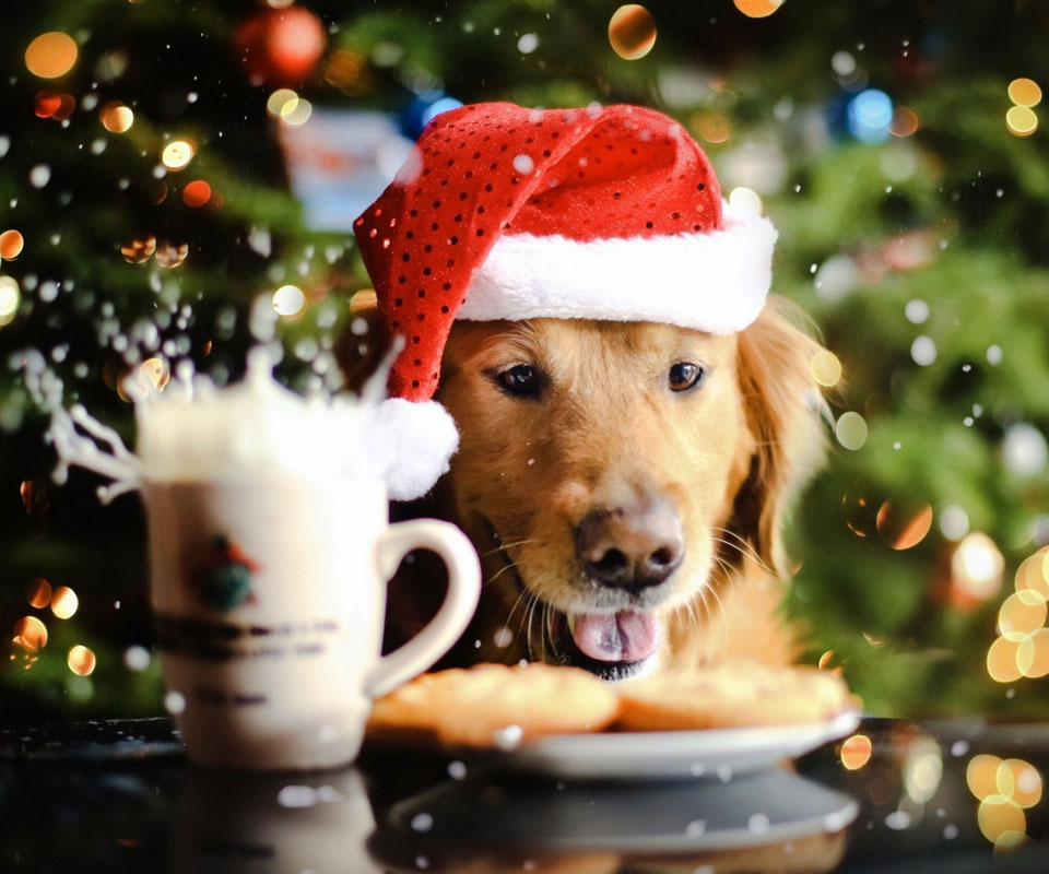 christmas-dog-wallpaper